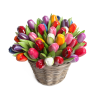 50 Tulips of 34 cm in a wicker basket